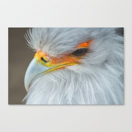 Feathers and eyelashes Canvas Print
