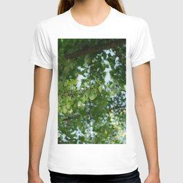 Ginkgo biloba tree in the city T-shirt