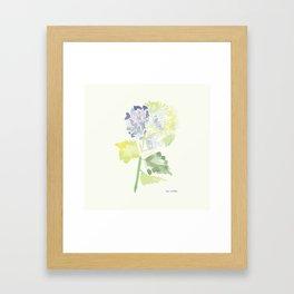 Watercolor Hydrangea Framed Art Print