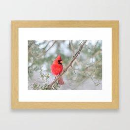 Winter's End Cardinal Framed Art Print