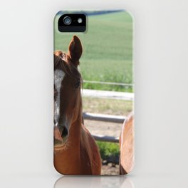 Horse Friends Photography Print iPhone Case
