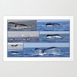 """whales tales""- Mauii  Art Print"