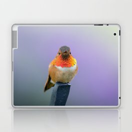 Rufous Hummingbird with lavender background Laptop & iPad Skin