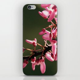 Cercis canadensis 'Forest Pansy' iPhone Skin