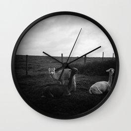 Alpaca/llama paddock Wall Clock