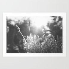 Lavender no. 1 Art Print