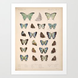 Vintage Hand Drawn Scientific Illustration Insects Butterfly Anatomy Colorful Wings Art Print