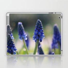 Blue spring - hyacinths in Manchester, England Laptop & iPad Skin