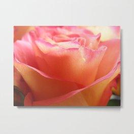 Two-Tone Roses #1 Metal Print