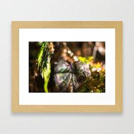 Spiderweb bokeh Framed Art Print