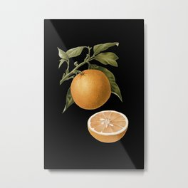 Orange - Botanical Metal Print