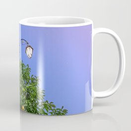 One Night Under The Stars Coffee Mug