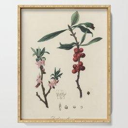 February daphne (Daphne mezereum)  from Medical Botany (1836) by John Stephenson and James Morss Chu Serving Tray