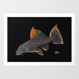 Scarlet Pleco Full Color Art Print