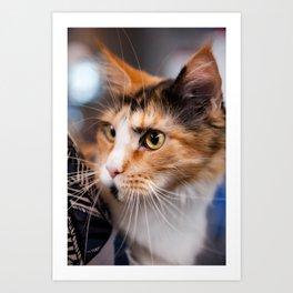 Red hair cat head portrait Art Print