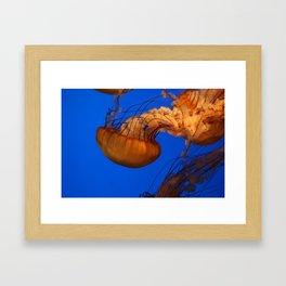 61010_jelly Framed Art Print