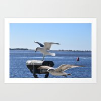 Seagulls in Southport NC Art Print