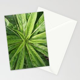 Cornwall Gardens Green Leaves Photo 1775 Stationery Cards