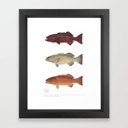 Barrier Reef Coral Trout Collection Framed Art Print