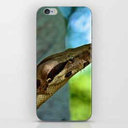 The Boa Constrictor  iPhone Skin