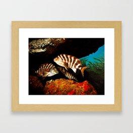 """""""Red Moki"""" Framed Art Print"""