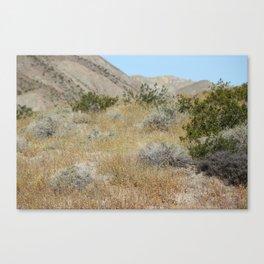 Wildflower Super Bloom 2019 Coachella Valley Wildlife Preserve Canvas Print