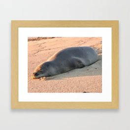 """Monk Seal on Poipo Beach"" Photography by Willowcatdesigns Framed Art Print"
