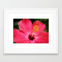 hibiscus Framed Art Prints featuring hibiscus by Dottie