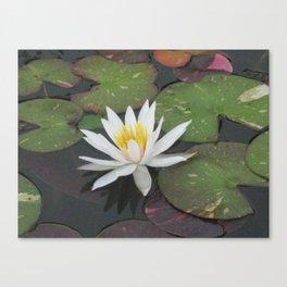 Calm Reflections Canvas Print