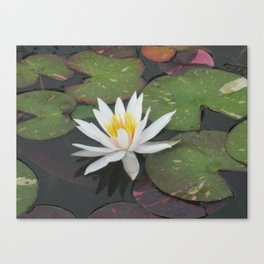 Calm Reflections Canvas Print