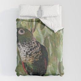 Captain Comforters