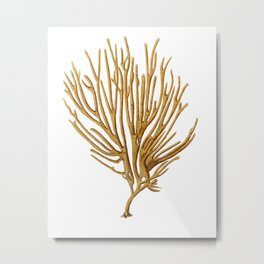 Sea Coral No.12 Antique Natural History Print. Metal Print