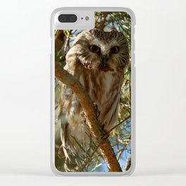 Tiny Beauty - Northern Saw-whet Owl Clear iPhone Case