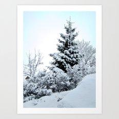Natures Christmas Tree Art Print