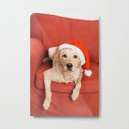 Dog with Christmas hat on armchair Metal Print