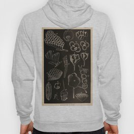 Wasp Architecture Hoody