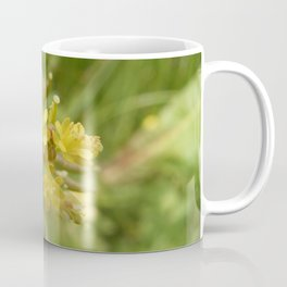 Rorippa Palustris Delicate Pale Mustard Flower Coffee Mug