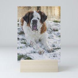 Beautiful Saint Bernard dog lying in the snow Mini Art Print