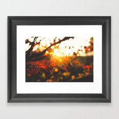 Beaming Fall Framed Art Print