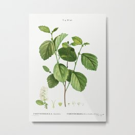 Witch alder, Forthergilla Alnifolia from Traité des Arbres et Arbustes que l'on cultive en France en Metal Print