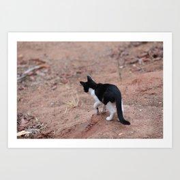 Adventurous Kitty Art Print