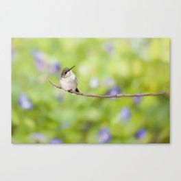 Lavender Dream Canvas Print