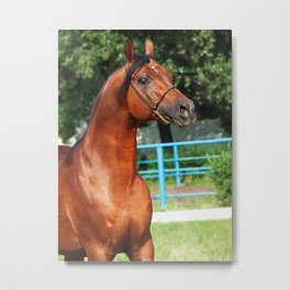 horse collection. arabian bay Metal Print