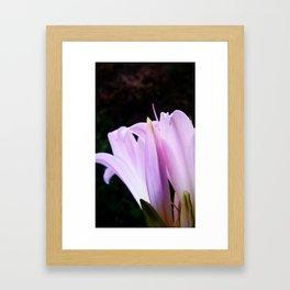 Naked Lady - Amaryllis Framed Art Print