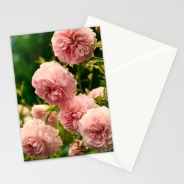 Dreaming in Roses Stationery Cards