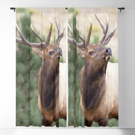 Watercolor Elk Bull 14, On the Scent Blackout Curtain