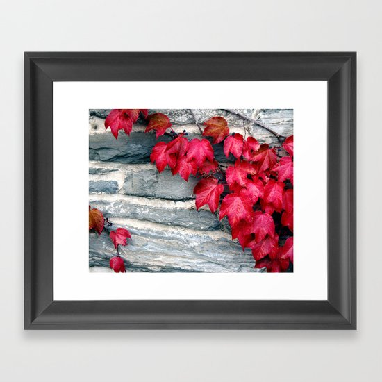 Fall's Ivy in New England Framed Art Print