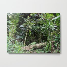 Tropical Rainforest 04 Metal Print