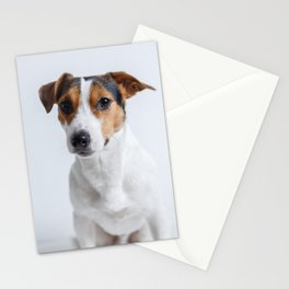 sweet little puppy dog Jack Russel Stationery Cards