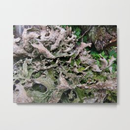 Life on a Fallen Tree Metal Print